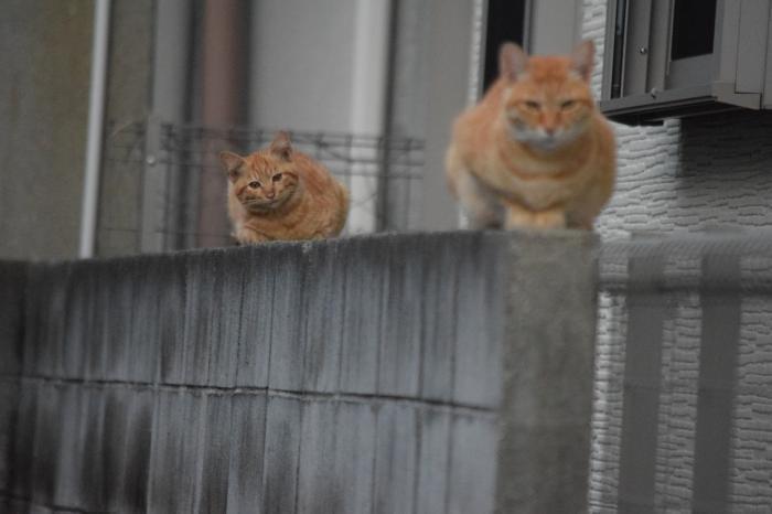 猫10,11