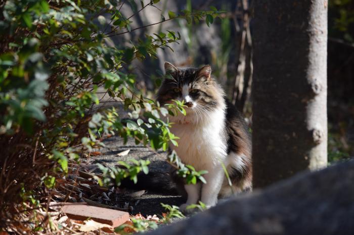 スワヒリ 語 猫