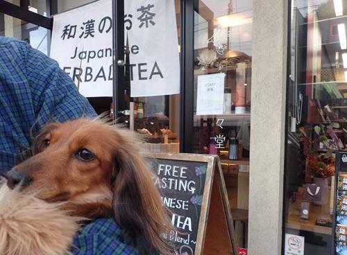 cafe-kamakura14.jpg