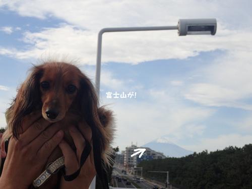 cafe-kamakura2.jpg