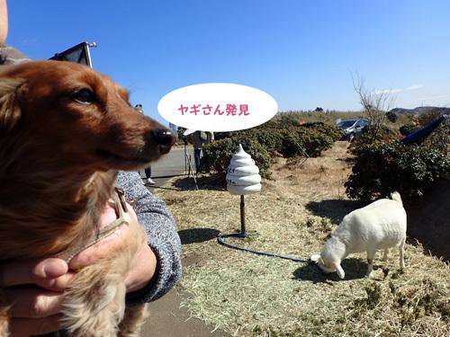 fuji9_20200320144415d0f.jpg