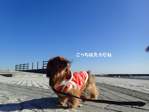 gyokou7.jpg