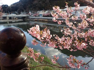 kawazu12.jpg
