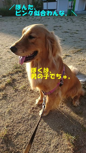 DSC_1216.jpg