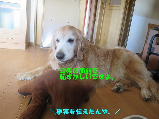 IMG_0592_20191125191010c43.jpg