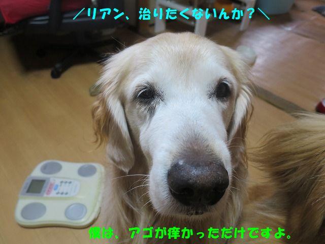 IMG_0753.jpg