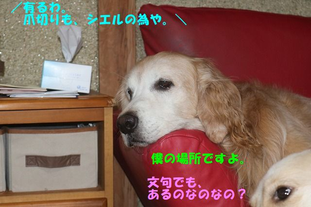 IMG_7009.jpg