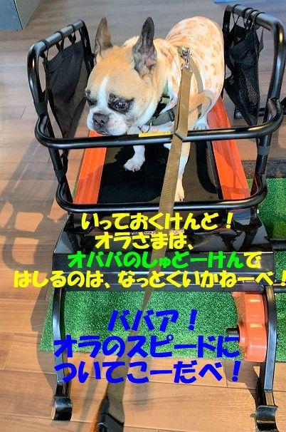 IMG_4846_201909050911151a2.jpg