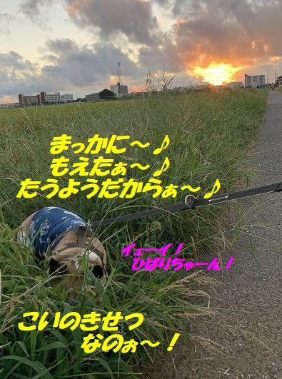 IMG_5137(1).jpg