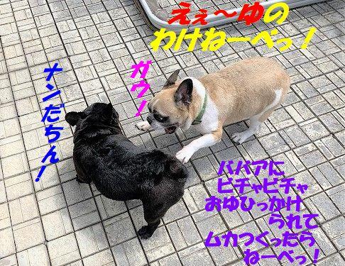 IMG_5218(1).jpg
