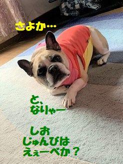 IMG_5258(1).jpg