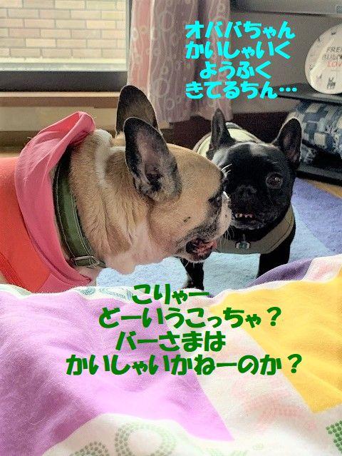 IMG_5262(1).jpg