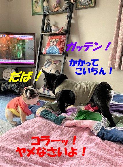 IMG_5264(1).jpg