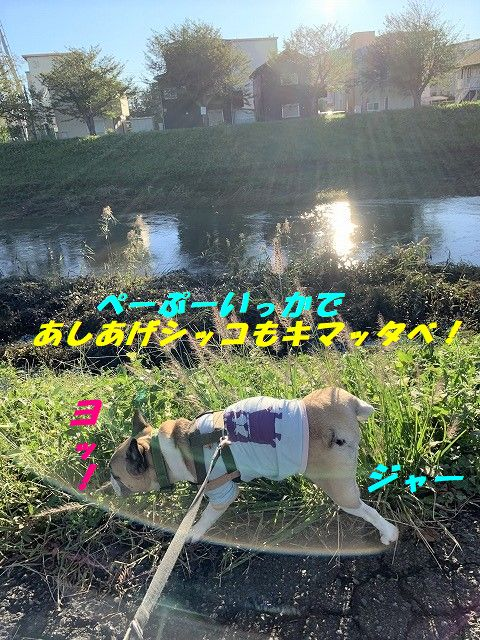 IMG_6362(1).jpg