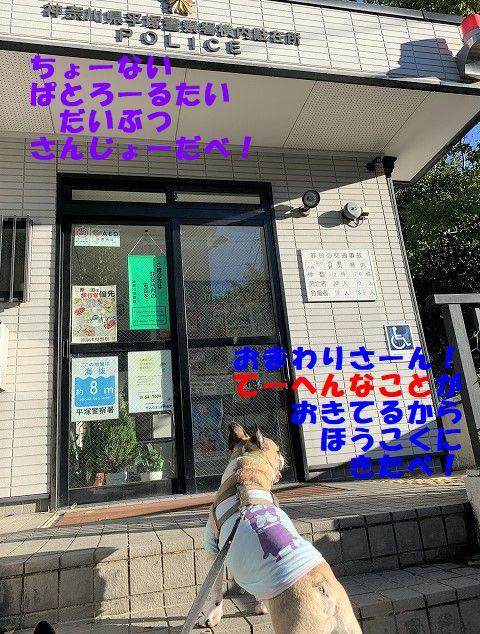 IMG_6376(1).jpg