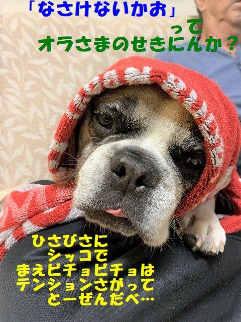 IMG_6685(1).jpg