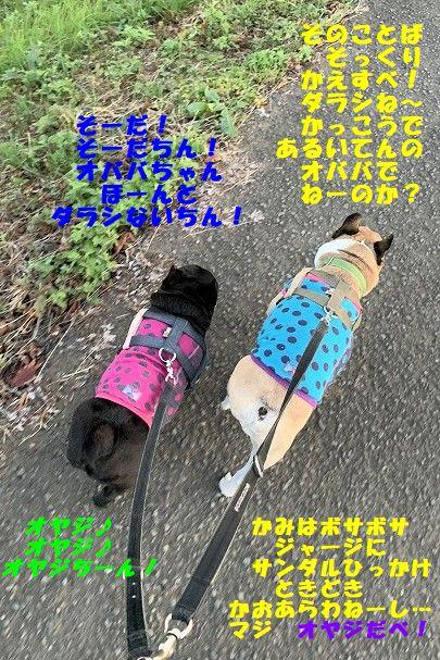 IMG_7335_20191120091748acb.jpg