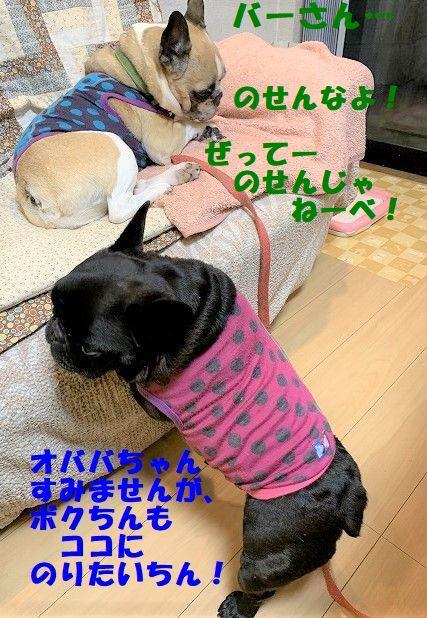 IMG_7353.jpg