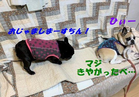 IMG_7354.jpg