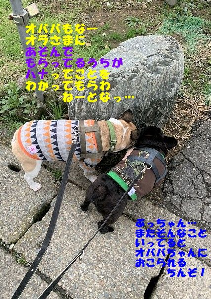 IMG_7466.jpg
