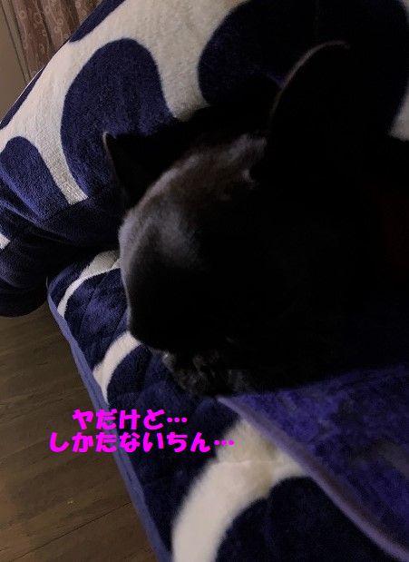 IMG_8554.jpg