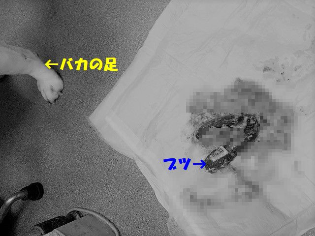 IMG_8861_202001241251113ac.jpg