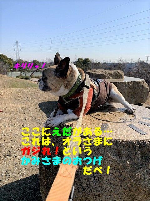 IMG_9384.jpg