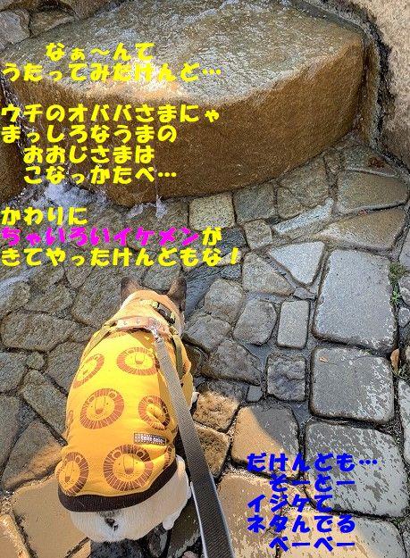 IMG_9473_20200213175427119.jpg