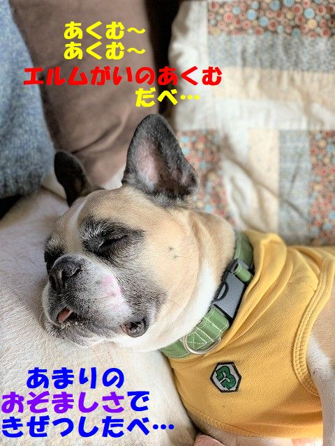 kisuma-ku_20191228111643c0a.jpg