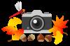 カメラと秋の彩り