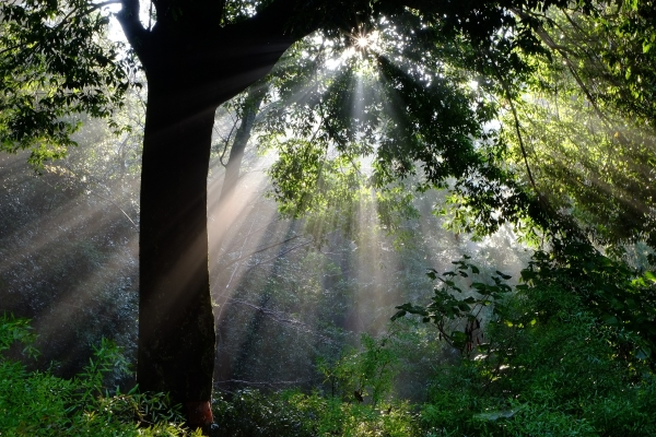 目覚める森