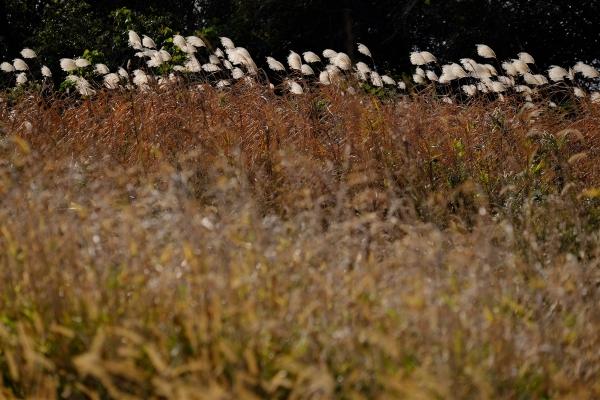 晩秋の草原