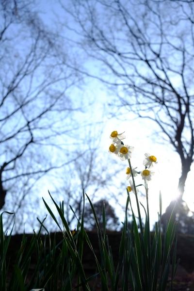 柔らかな冬の日差し