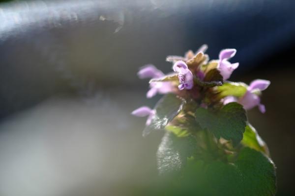 小さい春見つけた~♪