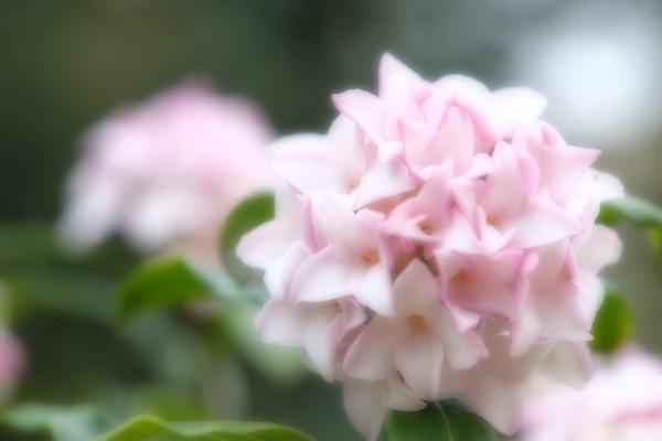 漂う春の香り