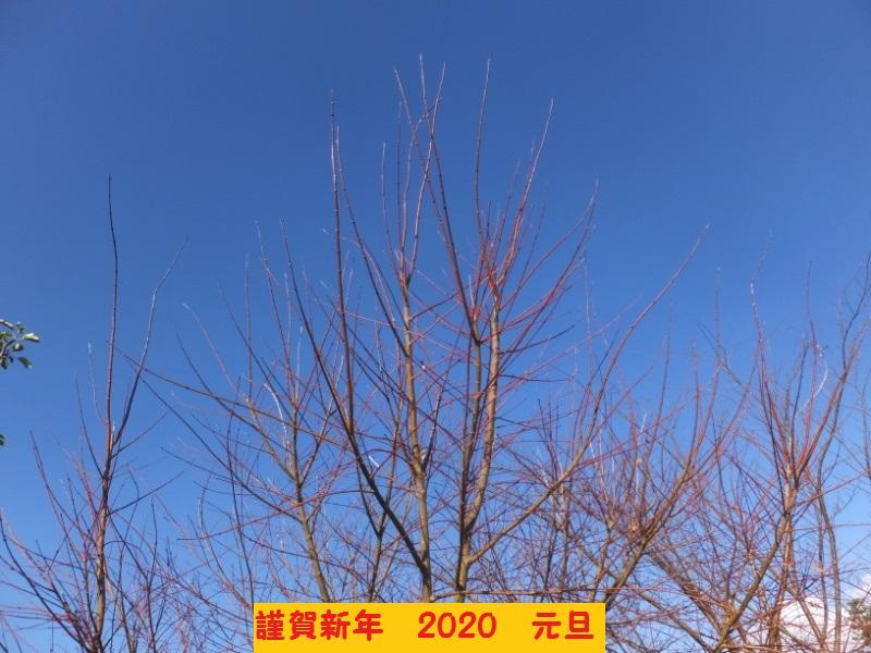 DSCF0080_1_202001011216531f9.jpg