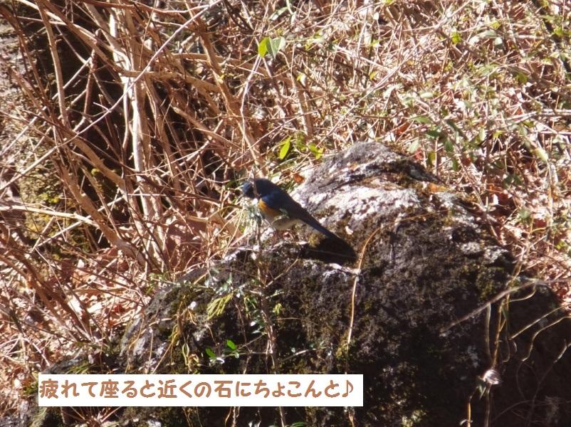 DSCF0624-1_1.jpg