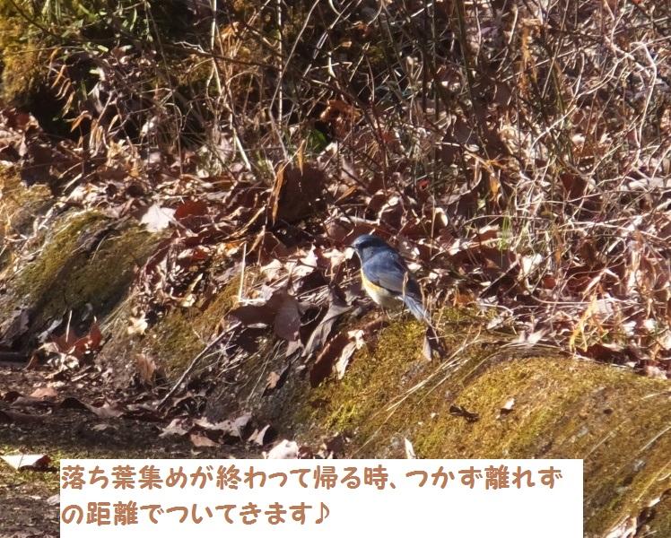 DSCF0633-1_1.jpg