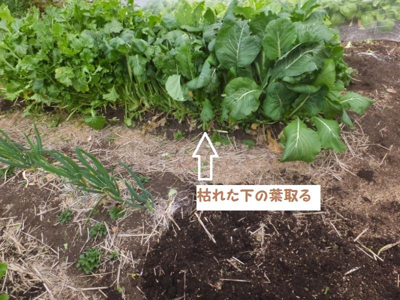 DSCF1110_1.jpg