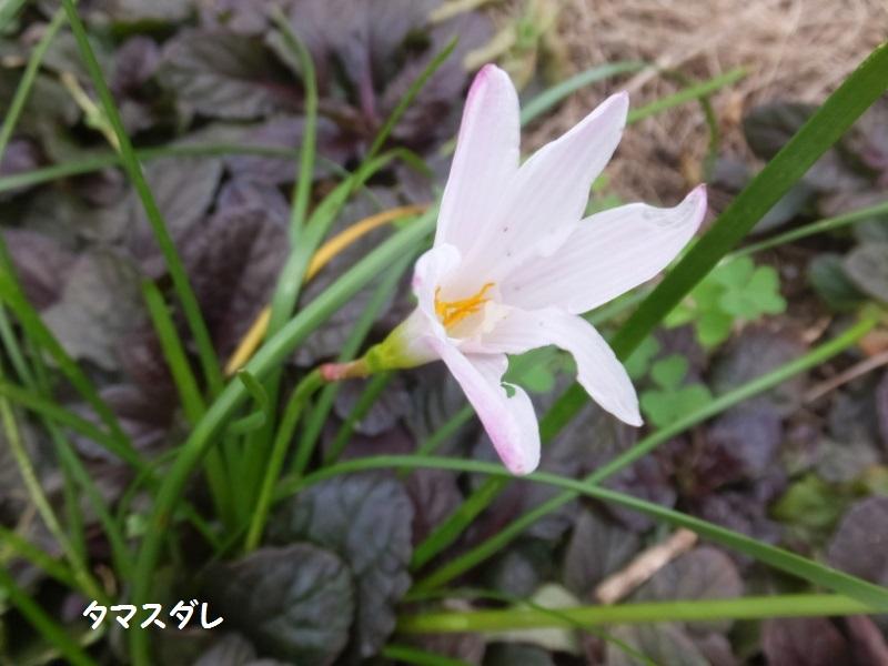 DSCF7360_1.jpg