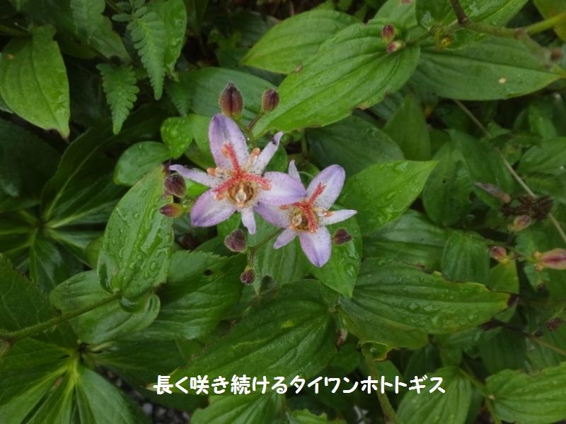 DSCF7631_1.jpg