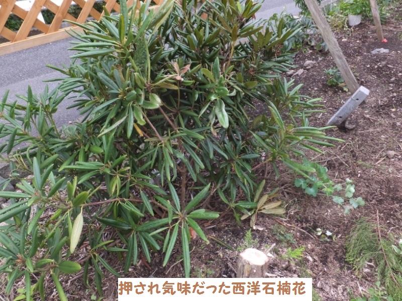 DSCF7905_1.jpg