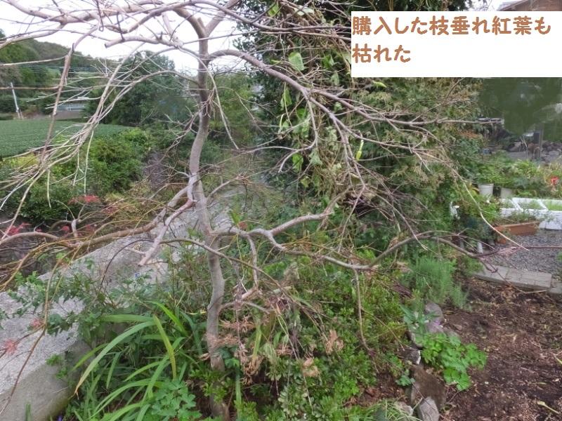 DSCF7988_1.jpg