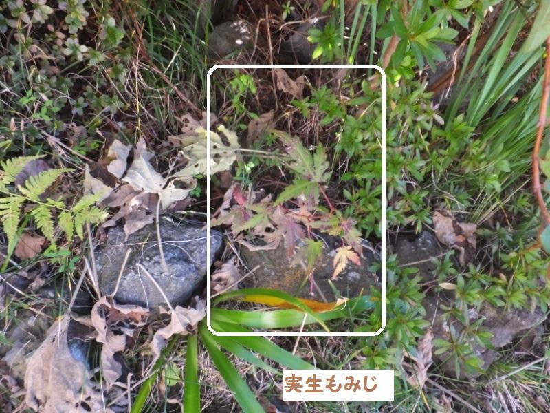 DSCF9621_1.jpg