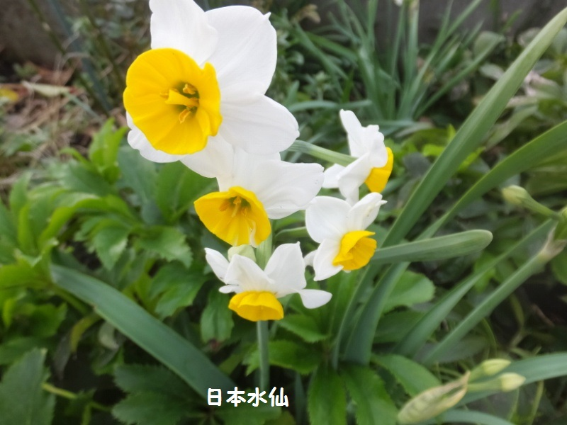 DSCF9645_1_20191211190617dca.jpg
