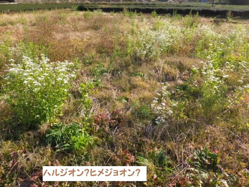 DSCF9761_1.jpg