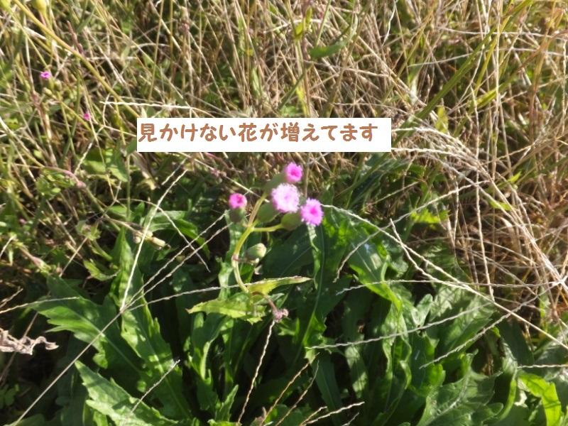 DSCF9764_1.jpg