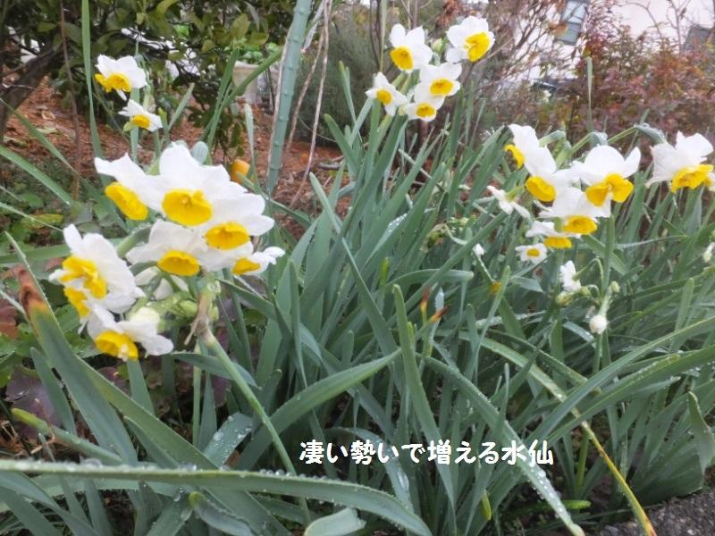 DSCF9988_1.jpg