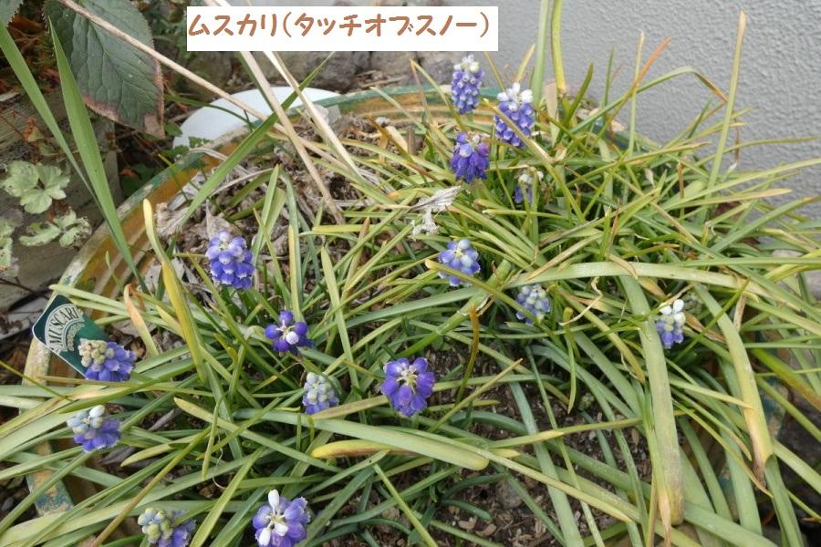 P1000690_1.jpg