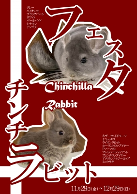 【POP】ラビット&チンチラフェスタ191129